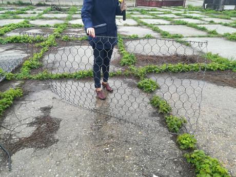 Pletivo na plot,
