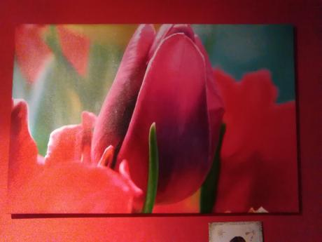 Obraz tulipan,