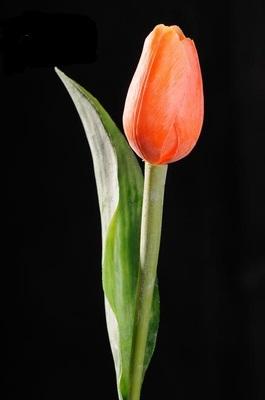 Tulipán umělý,