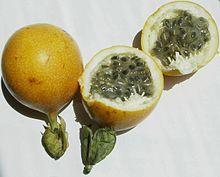 Passiflora ligularis (Mučenka sladká) - sadeničky ,