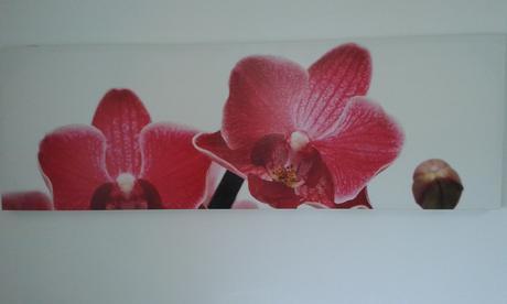 Obraz Orchidea,