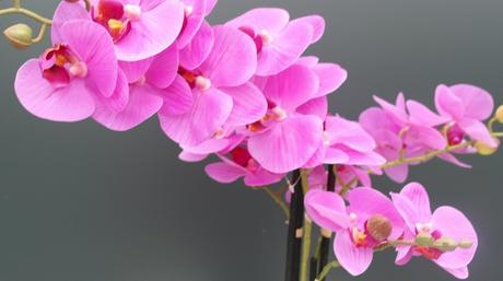 Umelá orchidea vysoká ,