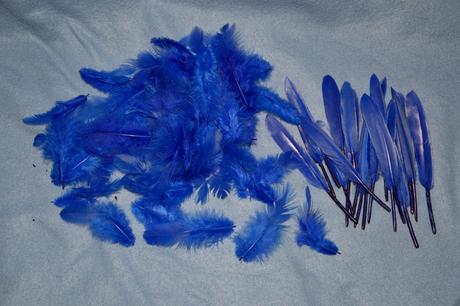 Ozdobné modré peří,