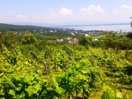 Pozemok s vinicou,