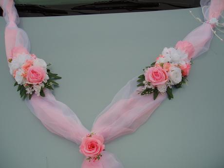 dvojšerpa růžová,