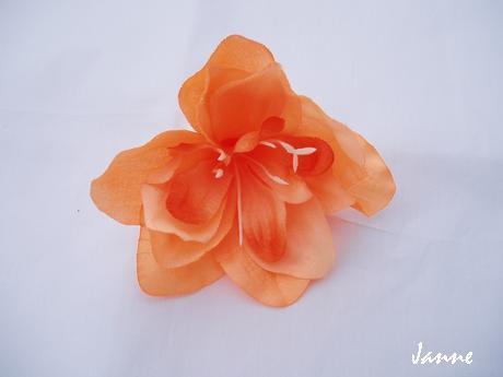 květ amarylisu,