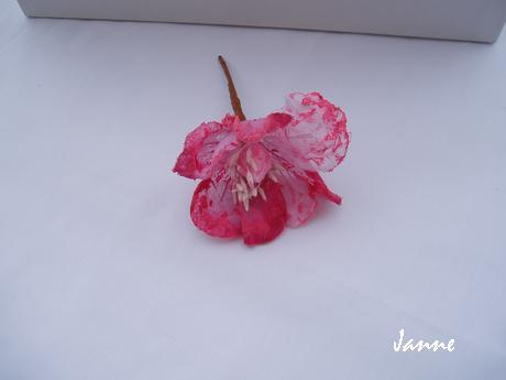 květ magnolie-fuchsiová,
