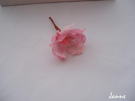 květ magnolie-světle růžová,