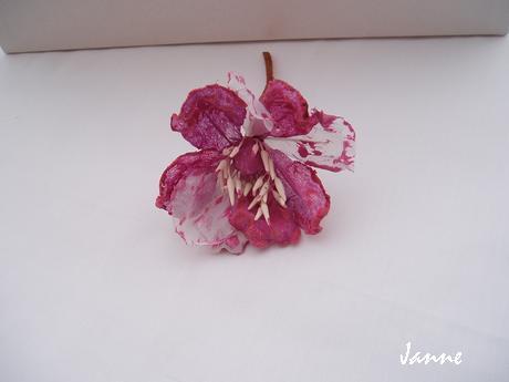 květ magnolie-temně růžová,