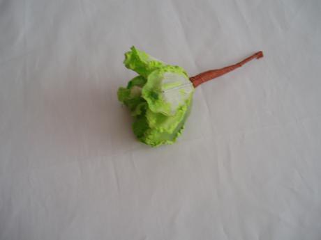 květ magnólie-zelený,