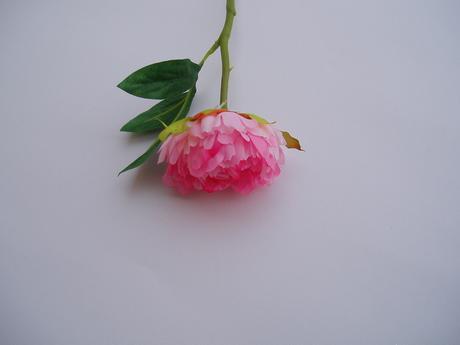 květ pivońky-růžový,