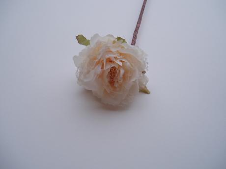 květ růže-smetanový,