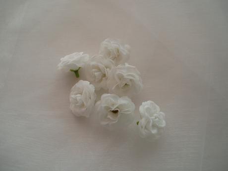 mini růže bílá,