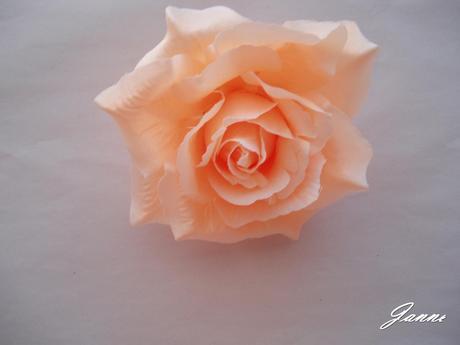 růže-lososová,