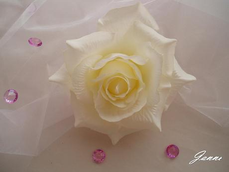 růže-smetanová,