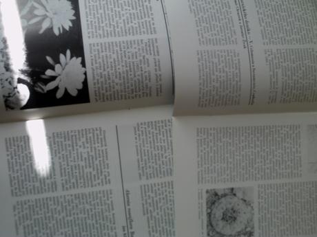 kniha o kaktusoch,