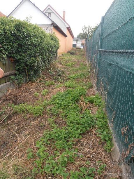 záhrada šenkvice,