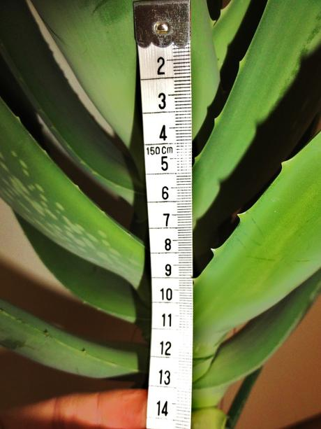 Aloe výhonky ,