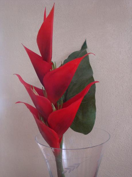 Heliconia s listom (KIKA),