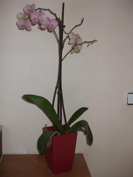 Kvetinac aj na orchideu,