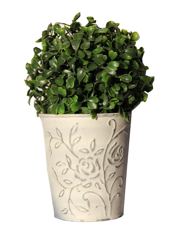Buxusová koule v plechovém květináči,