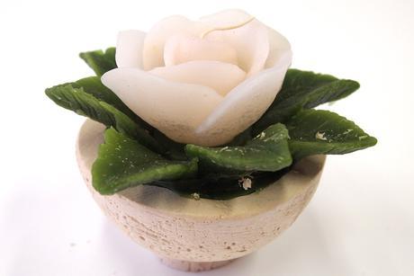 Sviečka ruža biela,