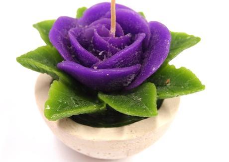 Sviečka ruža fialová,
