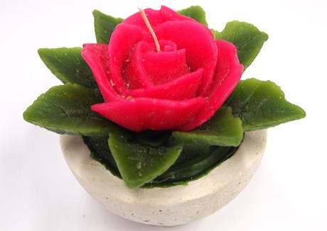 Sviečka ruža fuchsia,