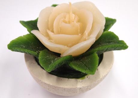 Sviečka ruža krémová,