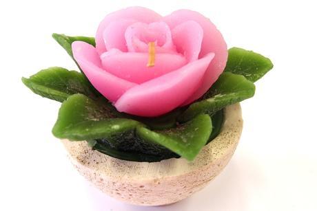 Sviečka ruža svetloružová,