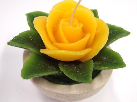 Sviečka ruža žltá,