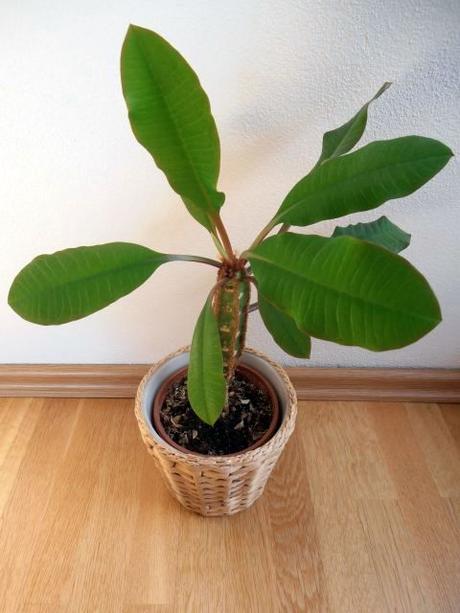Nenáročné izbové rastliny - aloe, prýštec, palma,