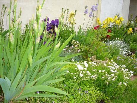bylinky a trvalky do záhrady a skalky,