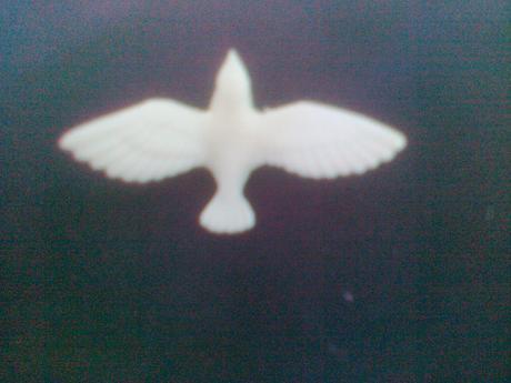 holubičky,