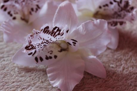 3x orchidea,