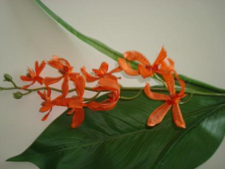 Umělá kytička orchidej, Ikea,