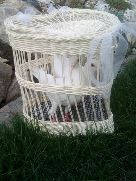 Bílé holubičky,