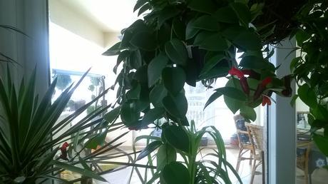 izb.kvet tahavý Monalíza štep ,