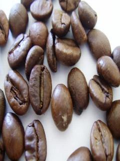 Kávovník arabský sadenica ,