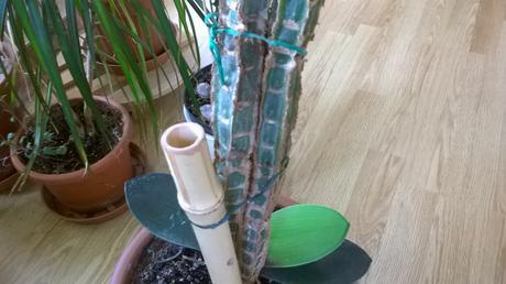 sukulent príštec trojhrannny palmový mládnik,