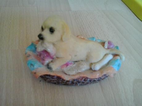 psík v košiku,