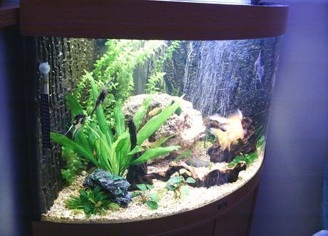 Akvárium Juvel Trigon190,