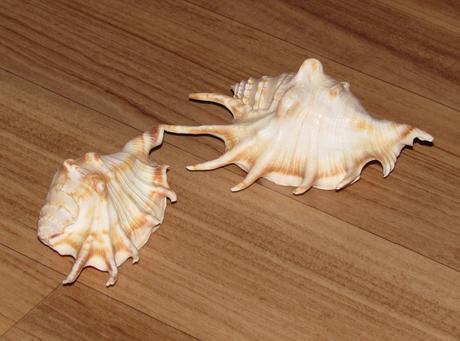 Lastury / mořské mušle,