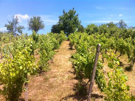 Viniočný dom, záhrada, vinohrad v Leviciach,