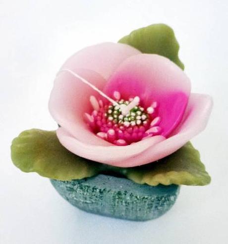 sviečka orchidea,