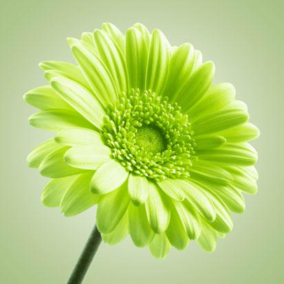 zelený obraz-kvet v skle,