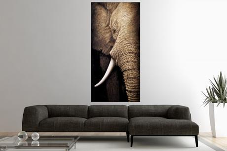 Obraz Elephant II,