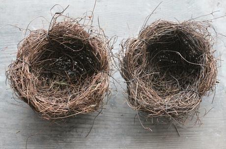 Vtáčie hniezdo pre prstienky,