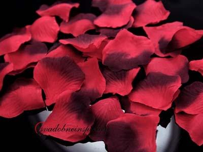 Lupienky ruží - Bordovo-červené (100 ks za 1 Eur),