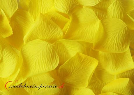 Lupienky ruží - žlté (100 ks),